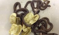 Deadly Snakes Hatch In Oz Toddler's Wardrobe