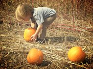 My son, Henry, looking for that perfect pumpkin.