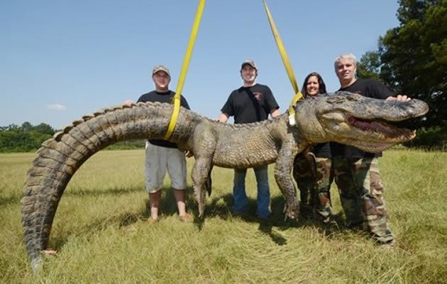Yahoo News - Jimmy Greer, of Canton, Dalco Turner, of Gluckstadt, and Jennifer Ratcliff and John Ratcliff, of Canton, pose by their record setting catch, a 741.5-pound male alligator, caught Sunday morning, Sept. 8, 2013, in a backwater area of the Mississippi River near Port Gibson, Miss. (Brian Albert Broom/AP/Clarion-Ledger)