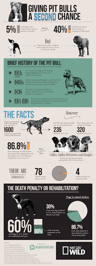 Giving Pit Bulls a Second Chance [Infographic] image pit bulls