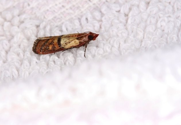 How To Prevent Or Eliminate Closet Moths Yahoo Homes