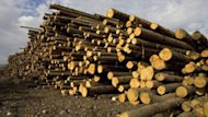 Nova Scotia Power will go ahead with its plans to build a biomass plant in Port Tupper.