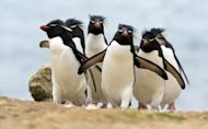 How to Recover From the Ravages of Google Penguin and Panda image Penguins hd wallpapers 300x187
