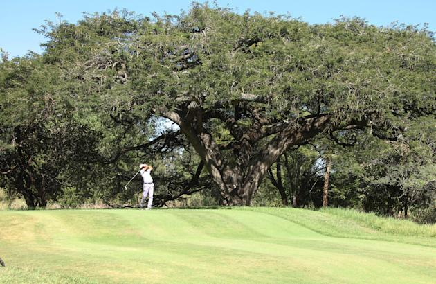 in this photo taken Monday, June 3, 2013, a golfer tees off at the century-old thorn tree with an umbrella-shaped canopy that offers shade to players on the 13th hole of Zimbabwe's oldest golf course,