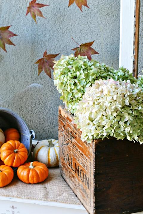 Incorporate Dried Hydrangeas Into Your Fall Decorating