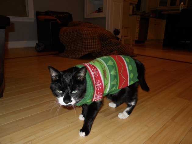 These 26 Cats Wearing Christmas Sweaters Will Put A Smile On Your Face image Cat Hates Christmas Sweater 800x600