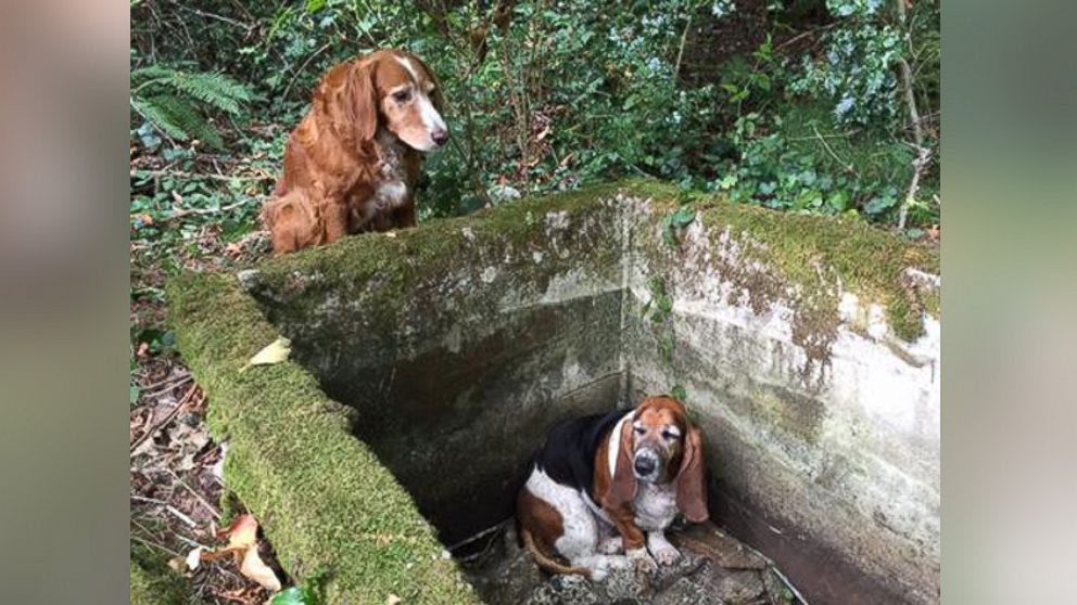 Dog Watches Guard Over Its Trapped 'Best Friend' for a Week After They Got Lost, Rescuers Say