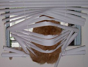 Master Spy Cats Reveal The Secrets To Feline Stealth! image behind the blinds.jpg