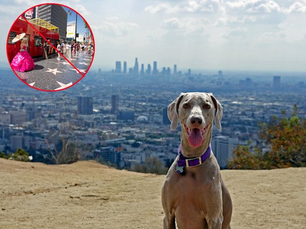 Celebrities love to go to runyan canyon. the hollywood walk of fame is