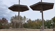 The controversial question over whether Toronto Zoo should continue its elephant program has gotten the attention of the Association of Zoos and Aquariums, the Toronto city council and other players.