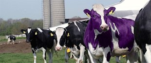 Why Your CPG Brand Isn't Remarkable and What You Can Do About It image purple cow