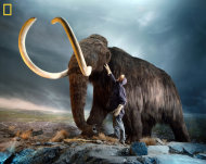 This photo shows a museum worker inspecting a replica of a woolly mammoth (Mammuthus primigenius), a relative of modern elephants that went extinct 3,000 to 10,000 years ago.