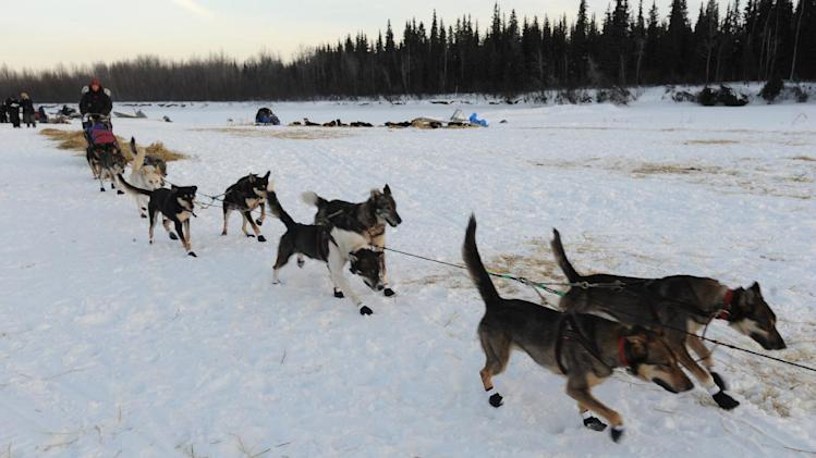 Veteran Iditarod musher Kelley Griffin of Wasilla leaves the Athabaskan village of Nikolai, Alaska, on Tuesday, March 5, 2013.  (AP Photo/Bill Roth, Anchorage Daily News)