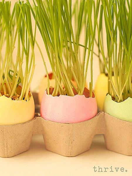 Colorful Wheat Grass Garden