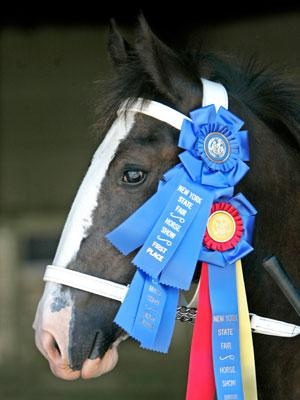 Blue-Ribbon State Fairs