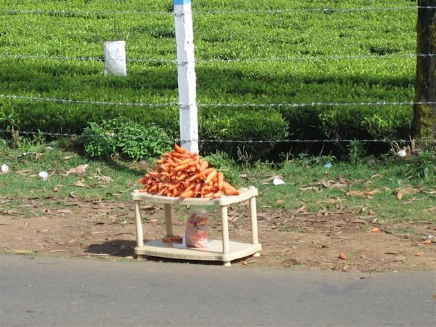 Fresh carrots being sold