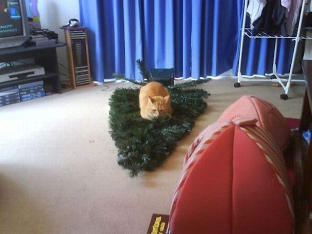 10 Animals Who Refuse To Get Into The Christmas Spirit image 84385619.jpg