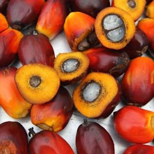 What is palm oil, and is it good for you?