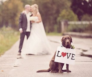 Can't bring your pet? You can still include them by taking portraits after the ceremony.