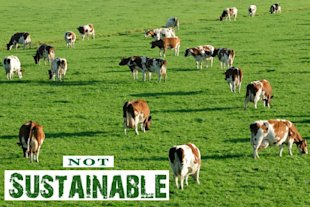 sustainable meat not green myth
