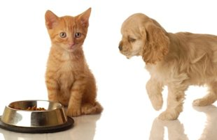 Cat and dog via Shutterstock