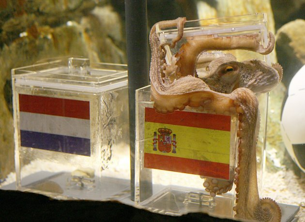 (FILES) - Picture taken on July 9, 2010 shows the octopus Paul sitting on a box decorated with a Spanish flag and a shell inside on at the Sea Life aquarium in Oberhausen, western Germany. Paul the octopus, who shot to fame during the football World Cup for his flawless record in predicting the outcome of games, will get a shrine to mark three months since he died, his aquarium said on January 17, 2011.  AFP PHOTO / PATRIK STOLLARZ (Photo credit should read PATRIK STOLLARZ/AFP/Getty Images)