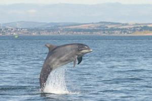 More Than Half of Stranded Bottlenose Dolphins May Be Deaf