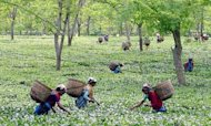 Indian Tea Plantation Boss Burnt To Death