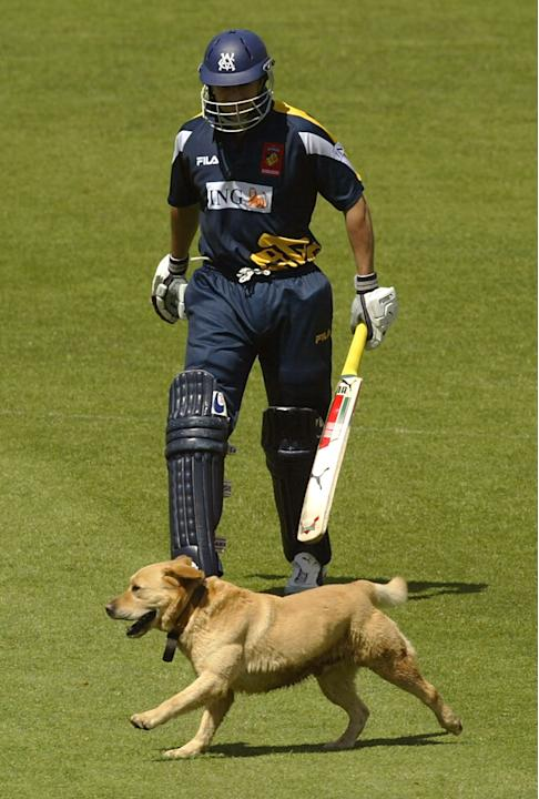A pitch invading Labrador accompanies Jon Moss of the Bushrangers to the crease