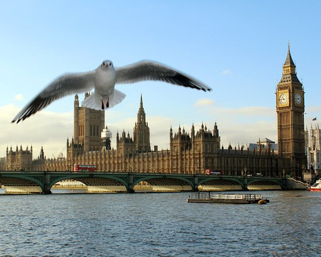 Surprise seagull in Westminster!