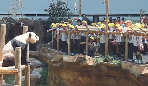 Zoo to charge RM50 for panda experience