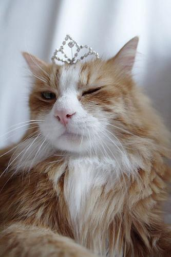 3. King Kitty