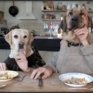 Dog Dining, Funny Video