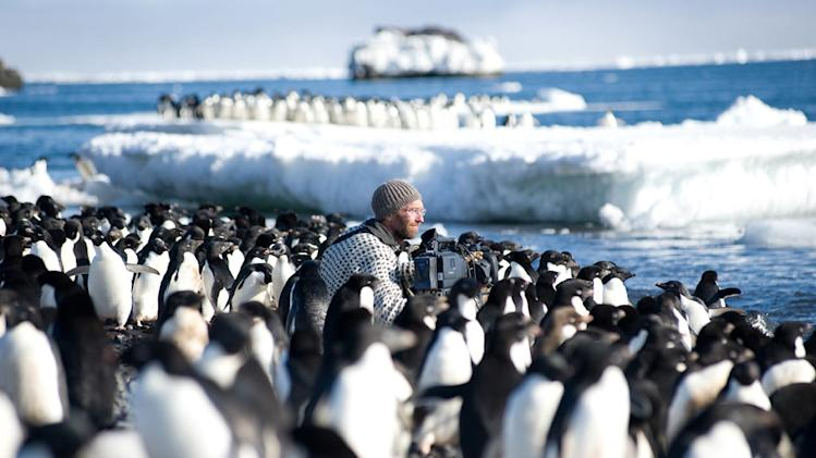Cameraman Mark Smith filming Adelie penguins on the beach of the Cape Crozier colony, Antarctica. After 1000 hours working alone amongst the penguins, Mark and producer Jeff Wilson began to lose their minds. Frozen Planet