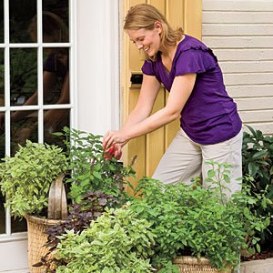 For beginner gardeners, growing herbs is a good way to start.