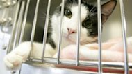The SPCA hopes to sterilize 800 cats in Prince George over the next year.