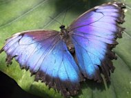 Without Change, There Would Be No Butterflies image Butterfly 300x225