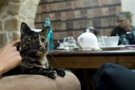 "Customers enjoy a beverage as a cat relaxes on an armchair at the ""Cafe des Chats"" several days before the inauguration in Paris September 16, 2013. REUTERS/Gonzalo Fuentes"