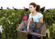 A grape picker with her trug at Bordeaux grand cru vineyard Chateau Haut-Brion last August. Last year's harvest produced hit-and-miss reds, but some surprising whites, say consultants