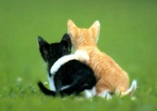 7 Ways to Create Lasting Blogger Friendships image cat friendship