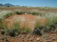"Mysterious bare spots called ""fairy circles"" dotting the sandy desert grasslands of Nambia have long stumped scientists who have no idea how the strange patterns form."