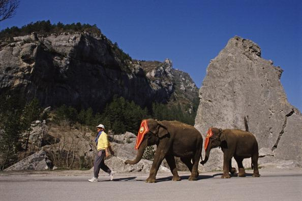 Cricketer Ian Botham of England recreates the trek of Hannibal across the Alps mountain range with elephants to raise funds for Leukaemia  Research on 30th March 1988 in Perpignan, France. (Photo by A