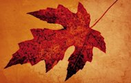 Decorate your home with the warm colors of autumn leaves.