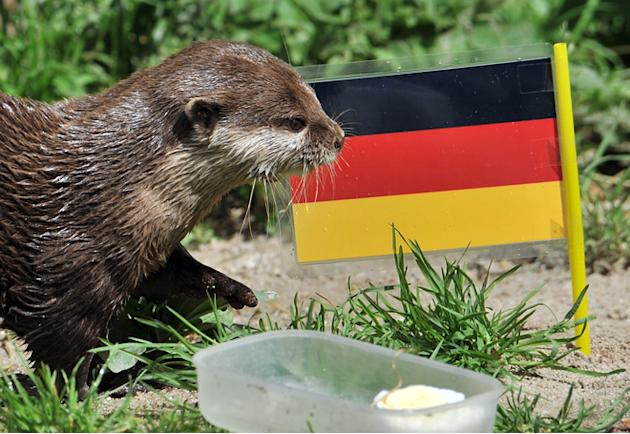 "Otter ""Ferret"" Votes AFP/Getty Images"