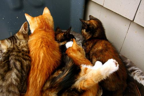 Fighting Pile of Kittens
