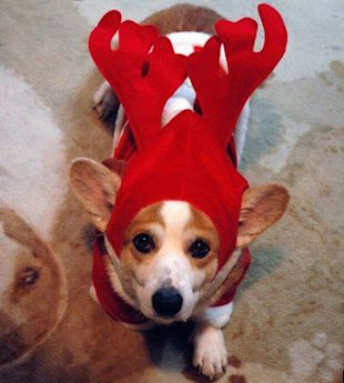 10 Animals Who Refuse To Get Into The Christmas Spirit image Cute Christmas Animals 48.jpg