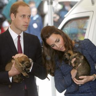 Catherine, the Duchess of Cambridge, holds a puppy with her husband, Britain's Prince William, as they tour the Royal New Zealand Police College in Wellington