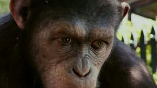 Rise Of The Planet Of The Apes: Miracle (UK TV Spot)