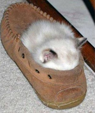 Master Spy Cats Reveal The Secrets To Feline Stealth! image dose.jpeg