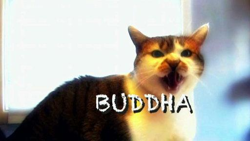 Buddha the Cat's Follow-Up